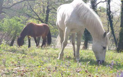 Allergie del cavallo e dell'alimentazione del cavallo anziano